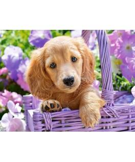 103799 - Puzzle cachorro de perro en la canasta, 1000 piezas, Castorland