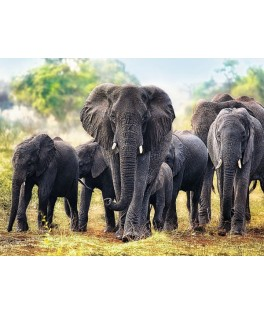 10442 - Puzzle elefantes africanos, 1000 piezas, Trefl