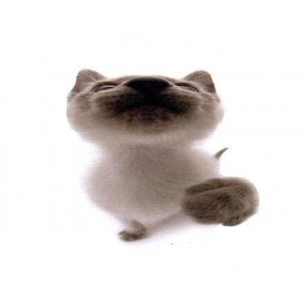 Comprar Minipuzzle Gato Mixed breed 2 ( Hana Deka Club )