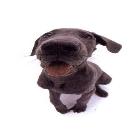 Comprar Minipuzzle Perro Greyhound